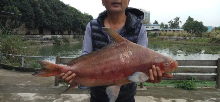 中国の魚 – 登木求魚