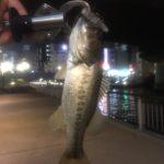 鯉ダンス不発からの2017道頓堀川バス釣りシリーズ開催
