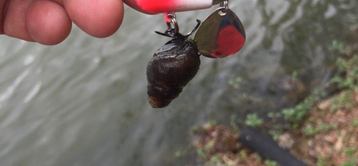 台北 ワイルド釣り第一弾 期待通りのボウズです!!