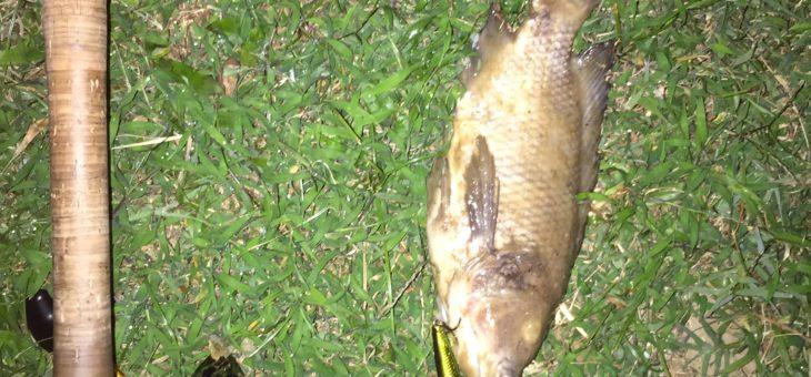 正月台北で釣りしてみたけどやっぱりボウズだった。