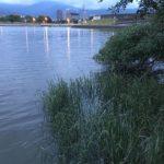台湾台北市士林區家の裏の川でターポン釣り ボウズ!!!!