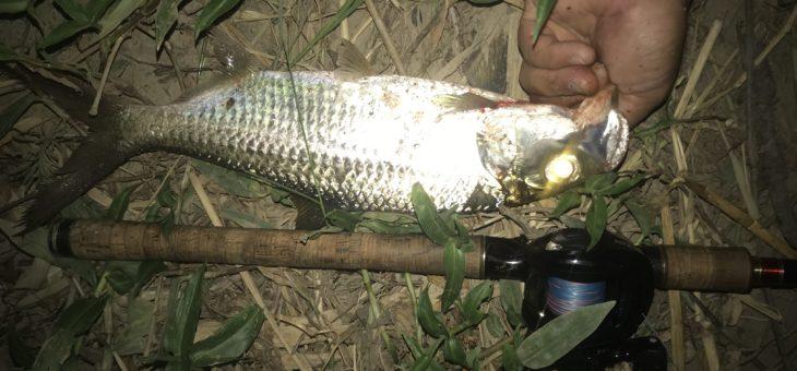 ターポン(イセゴイ)釣り日記と化している最近。本当はナマズが釣りたいんです。in台北