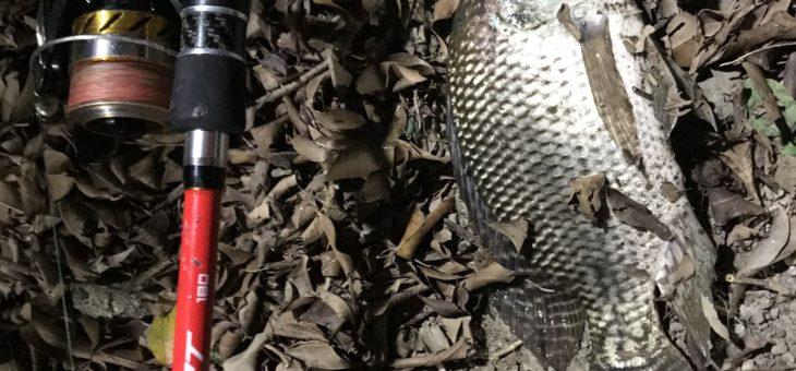 新北市の八里で釣りできなくて、その辺の池で亀とティラピア釣りに終わった。