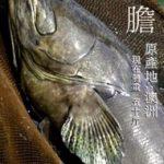 中国アマゾン釣り堀新種追加情報