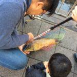大阪市アリゲーターガーを探してたら鯉が釣れた