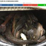 台湾外来魚釣りで賞金ゲットだぜ!!!+ドイツの釣具購入でもめる。明日金返せよ~~~♪