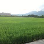 台湾でボウズ6連発目 タイワンドジョウの姿は見えるも釣れなかった~~