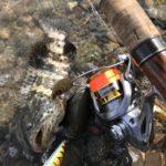 台湾で根魚グルーパー釣りの結果、ヤイトハタの幼魚が釣れた!!