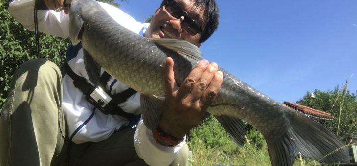 台湾の釣り堀にてアオウオをルアーで釣る。パンプカでアオウオに絶句し、シザーコームとフリックシェイクデビュー完了