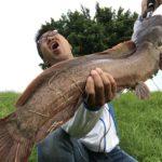 海外ナマズは昼でもペンシルベイトで釣れるのか台湾で検証してみた