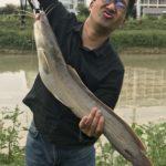 トップ ウォーター プラグで海外ナマズ釣り。スピンガバチョで釣れる!!