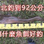 台湾のクラリアスにもジャッカルのスピンガバチョは有効か検証してみた。