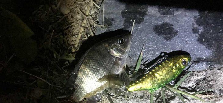 ダナンで釣り。二回目の開拓釣行だが、難易度は高かった・・・