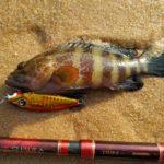 ショアジギin西アフリカ:シエラレオネ、自力開拓釣りは小さくても嬉しい