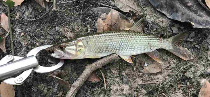 アフリカ・シエラレオネ自力開拓釣りをやってみた結果